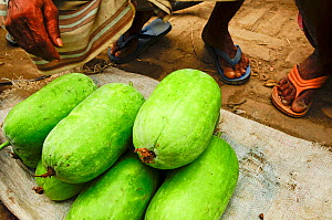 Close-up of melons for sale in a market of Dhaka, Bangladesh, June 2012.  -  Enrique Lopez-Tapia