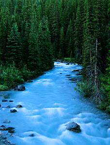Nigel Creek with conifer forest at dusk, Banff National Park, Rocky Mountains, Alberta, Canada  -  Oriol Alamany