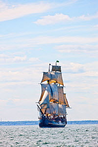 Tall ship 'Bounty', which sank off the coast of North Carolina during Hurricane Sandy in October 2012, seen here in Rhode Island, USA, July 2012. - Onne van der Wal