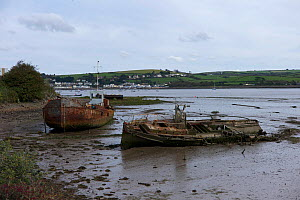 Rusting boats at Appledore on the River Torridge, North Devon, England, October 2012.  -  Rob Cousins