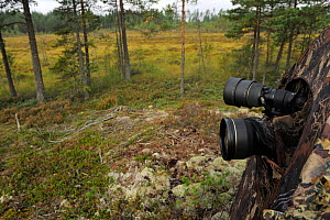 Camera lenses from photogrpahy hide tent, set up for photogrpahing  bears, Karmansbo, Vastmanland, Sweden August 2011  -  Staffan Widstrand