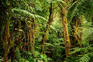 Tropical forest at lower level slopes of Mount Kilimanjaro volcano, Tanzania - Enrique Lopez-Tapia