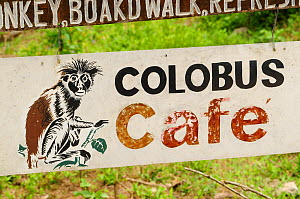 A sign for the Colbus Cafe in the Jozany Forest . Zanzibar red colobus (Piliocolobus kirkii), Jozany Forest, Zanzibar, Tanzania. Highly endangered  -  Enrique Lopez-Tapia
