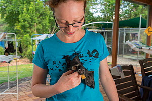Spectacled flying fox (Pteropus conspicillatus) baby or bub is cared for by Ashleigh Johnson, volunteer wildlife carer at Tolga Bat Hospital, North Queensland, Australia October 2012 - Jurgen Freund