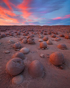 Strange mud concretions litter the ground in an area called 'the Pumpkin Patch' of the desert wash in Anza Borrego State Park, California, USA, May. - Floris van Breugel