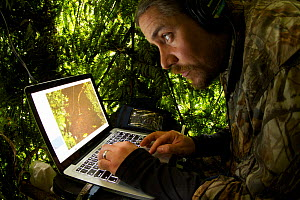 Ornithologist Ed Scholes at computer station in blind, operating remote controlled cameras to capture the Wahnes's Parotia, Papua New Guinea, 2011  -  Tim Laman/Nat Geo Image Collection