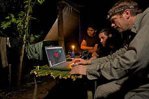 Photographer Tim Laman checking digital pictures on his laptop at his rain forest camp site in the mountains of Batanta Island, whilst Ornithologist Edwin Scholes and Samkris Tindige look on, Papua N...  -  Tim Laman/Nat Geo Image Collection