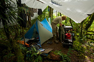 Photographer Tim Laman packs up gear at his camp site in the Foja Mountains, Papua, New Guinea 2007  -  Tim Laman/Nat Geo Image Collection
