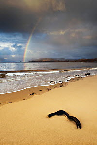 Rainbow arching across a stormy sky over Kentra Bay, north-west Scotland, October 2009.  -  UNCATALOGUED