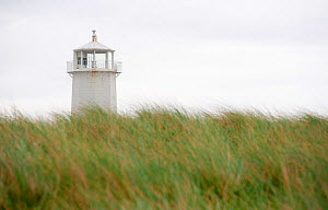 Whitewashed lighthouse rising out of dune grass on Walney Island off the Cumbrian coast, England, August 2009.  -  UNCATALOGUED