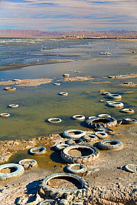 Old automobiles tyres on the shore of the Salton Sea, with gulls and industrial plant in the background. Salton Sea National Wildlife Refuge, California, USA, October 2010. - Marie Read