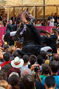 Lady on a black Menorquin stallion and man on a chestnut Andalusian stallion, performing the bot or walking courbette of the Doma Menorquina, during the festival Mare de Deu de Gracia, in Mahon, Menor...  -  Kristel Richard