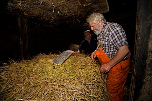 Cider maker Ron Barter treating hay as part of the production process. Devon, UK, November 2010.  -  Andrew Cooper