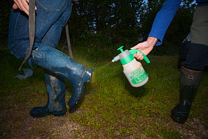 As part of biosecurity measures, Defra Field Workers sterilise their boots during European Badger (Meles meles) bovine tuberculosis vaccination trials in Gloucestershire, UK June 2011.  -  Neil Aldridge
