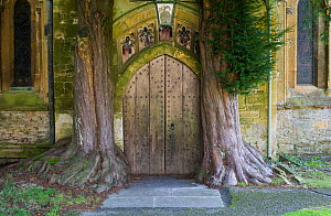 View of the church door ar St Andrews Church, Stow on the Wold, with mature yew trees (Taxus baccata) growing either side of the door, Gloucestershire, England, October 2010 - Gary K. Smith