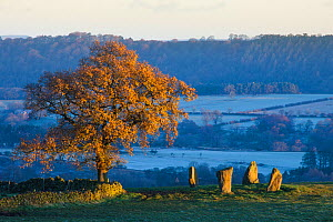 Nine Stone Close stone circle, Peak District National Park, Derbyshire, UK. November.  -  Alex Hyde