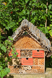 Artificial nesting place for insects 'bug hotel'. Lower Saxony, Germany, September. - Kerstin Hinze