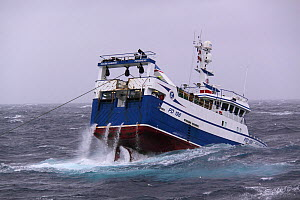 Fishing vessel 'Ocean Harvest' trawling in heavy swells on the North Sea, Europe, August 2012. Property released. - Philip Stephen