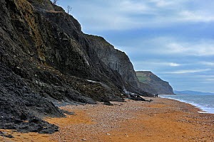 Black Ven landslide on beach between Lyme Regis and Charmouth along the Jurassic Coast, Dorset, UK, November 2012  -  Philippe Clement