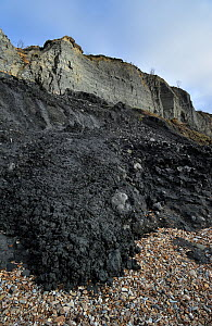 Black Ven landslide on beach between Lyme Regis and Charmouth along the Jurassic Coast, Dorset, UK November 2012  -  Philippe Clement
