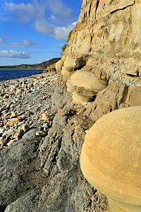 Rounded nodules on the beach near Osmington Mills, made of calcite-cemented sandstone from the Bencliff Grit Formation along the World Heritage Site Jurassic Coast, Dorset, UK, November 2012  -  Philippe Clement