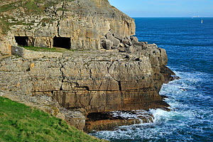 Tilly Whim quarry and caves at Anvil Point, Durlston Head on the Isle of Purbeck along the Jurassic Coast in Dorset, UK, November 2012  -  Philippe Clement