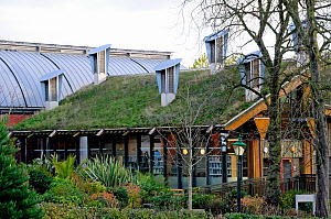 Green roof on The Centre for Understanding the Environment (CUE) an eco building with cowls on the roof which incorporate a passive ventilation system. The Horniman Museum, London, UK  -  Pat  Tuson