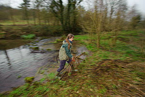 A member of staff from the Wildwoood Trust carrying branches as trees are cut to improve water vole habitat on a stream by allowing growth of bankside vegetation, East Malling, Kent England, February... - Terry Whittaker / 2020VISION