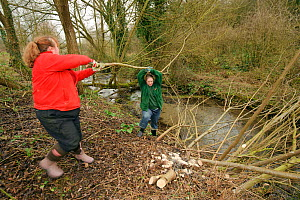 Staff and a volunteer from The Wildwoood Trust moving large branches of trees cut down to improve water vole habitat on a stream and to allow growth of bankside vegetation. East Malling, Kent England,... - Terry Whittaker / 2020VISION