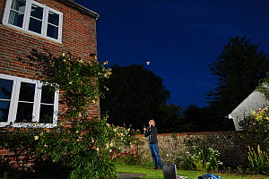 Man watching a brown long-eared bat (Plecotus auritus) emerge from a house roof. Kent, UK, June 2011. Model released - Terry Whittaker / 2020VISION