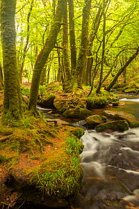 Golitha Falls, River Fowey flowing through wooded valley with moss covered trees, Nr St Cleer, Cornwall, UK, May 2012  -  Ross Hoddinott / 2020VISION