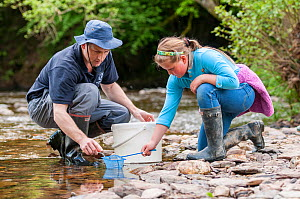 School child releases salmon fry in the River Haddeo, with Westcountry Rivers Trust (WRT) warden. Bury, Exmoor National Park, Somerset, UK. May 2012. Editorial use only  -  Ross Hoddinott / 2020VISION