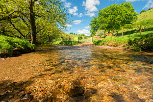 River Exe, near Winsford, showing river correctly fenced to stop cattle from polluting the river, or eroding the river banks. Healthy example of river habitat. Exmoor National Park, Somerset, UK. May...  -  Ross Hoddinott / 2020VISION