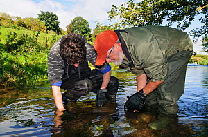 Fisheries assistant Stephanie Kershaw and volunteer John Dumont from the Eden Rivers Trust searching for White clawed crayfish (Austropotamobius pallipes) as part of a capture and release conservation... - Linda Pitkin / 2020VISION