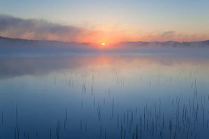 Mist rising from the River Spey at dawn, Cairngorms National Park, Scotland, UK, May. - Peter Cairns / 2020VISION