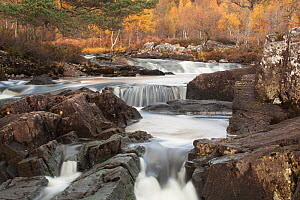 River Affric flowing through a rocky gorge, Glen Affric National Nature Reserve, Scotland, UK, October 2012. - Peter Cairns / 2020VISION
