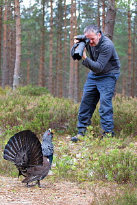 Male Capercaillie (Tetrao urogallus) displaying at photographer Andy Parkinson whilst on assignment for 2020VISION, Cairngorms National Park, Scotland, UK, March. - Andrew Parkinson