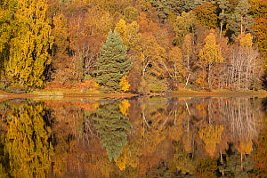 RF- Trees reflecting in Loch Vaa, Cairngorms National Park, Scotland, UK, October 2012. (This image may be licensed either as rights managed or royalty free.) - Peter  Cairns / 2020VISION