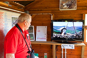 Man watching the Dyfi Osprey nest live web cam in the visitor centre, Dyfi Osprey Project, Powys, Wales, UK, May 2012. - Mark Hamblin / 2020VISION
