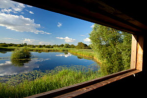 View through window of birdwatching hide, Woodwalton Fen National Nature Reserve, Cambridgeshire, England, UK, July 2012. - Mark Hamblin / 2020VISION