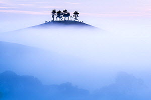 Colmers Hill in morning mist, near Bridport, Dorset, UK. September 2012. - Ross Hoddinott