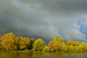 Storm clouds over trees and  reed beds (Phragmites communis) Danube delta rewilding area, Romania, May  -  Wild Wonders of Europe / Widstrand