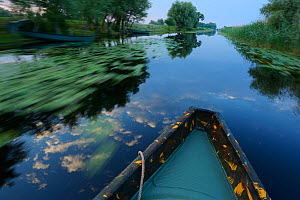 Boat trip down the Danube river, Danube delta rewilding area, Romania  -  Wild Wonders of Europe / Widstrand