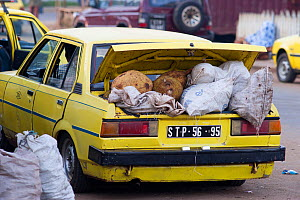Taxi with boot loaded with Breadfruit and charcoal from market in Sao Tome, Democratic Republic of Sao Tome and Principe, Gulf of Guinea 2009  -  Jabruson