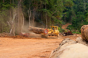 Bulldozer used for large-scale hardwood timber extraction with hardwood logs being readied for loading onto railway trucks that will collect timber from lumber yard located inside the Lope National Pa... - Jabruson