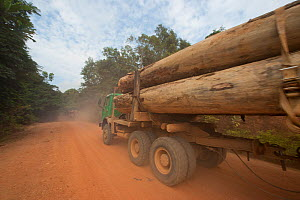 Trucks used for large-scale hardwood timber extraction with hardwood logs being taken from lumber yard located inside the Lope National Park. Onward shipment via sea takes place from Libreville, Gabon... - Jabruson