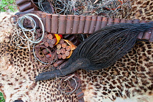 Poacher's haul of Leopard skin (Panthera pardus), African forest elephant (Loxodonta africana cyclotis) tail, ammunition and wire snares, confiscated from near National Park, Gabon - Jabruson