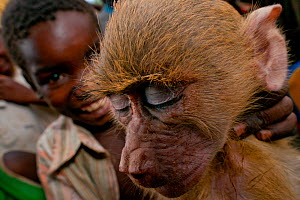 Mozambican children with captive Yellow Baboon (Papio cynocephalus) youngster, caught during troop crop raiding. Pemba to Montepuez highway, north-eastern Mozambique. No release available.  -  Jabruson