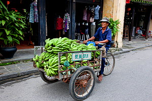 Street trader with bananas on bicycle in Hoi An, UNESCO World Heritage Site, Vietnam October 2011  -  Sue Flood