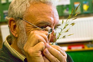 Botanist Ray Woods identifying grass species with an eye piece.  Radnorshire Wildlife Trust Nature Reserve, Wales, UK, June.  -  David Woodfall